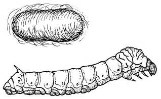 file silkworm psf png wikimedia commons