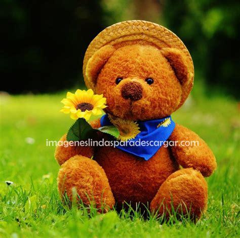 imagenes para mi perfil bonitas fotos para perfil whatsapp imagenes lindas para descargar