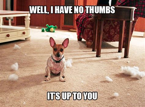 Pet Insurance Meme - 10 things pets would do if they had thumbs healthy paws