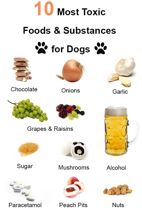 foods toxic to dogs 10 most toxic foods and substances for dogs