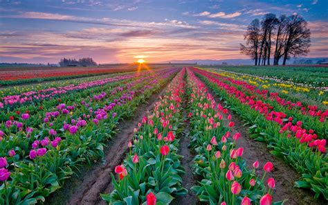 world best flower the most beautiful and best flower fields in the