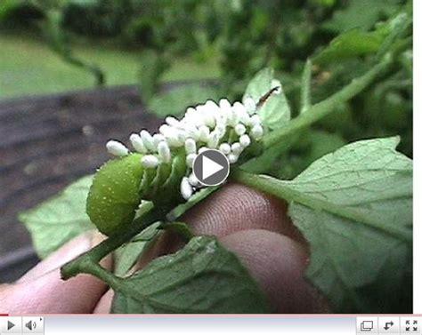 helpful gardening tips newsletter from american nettings fabric inc