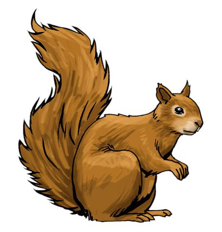 squirrel clip squirrel clipart clipground
