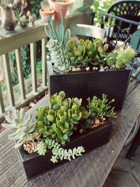 display succulents  cute examples digsdigs