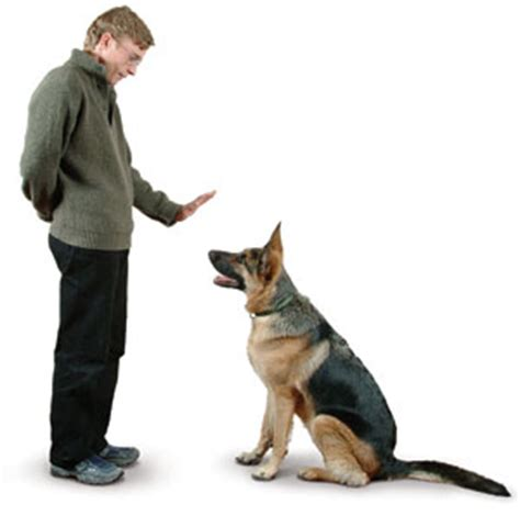 how to trained dogs should you your yourself or use a trainer thedogtrainingsecret