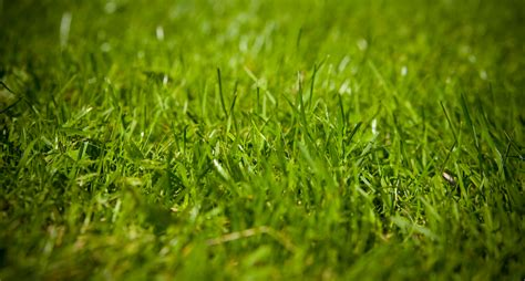 Grass Removal by Thinking Of Getting Rid Of Your Lawn Read This