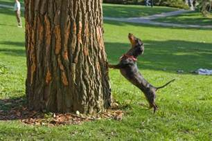 when the dogs bark treed a year on the trail of the longtails classic reprint books born storytellers barking up the wrong tree the