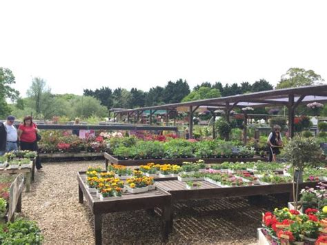 Garden Centres East Anglia birds eye view of thetford garden centre picture of thetford garden centre thetford tripadvisor