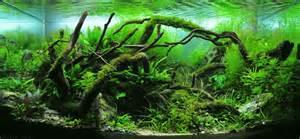 nature aquascape iwagumi vissenpraat