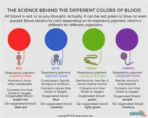bloods colors what colour is blood gifographic for mocomi