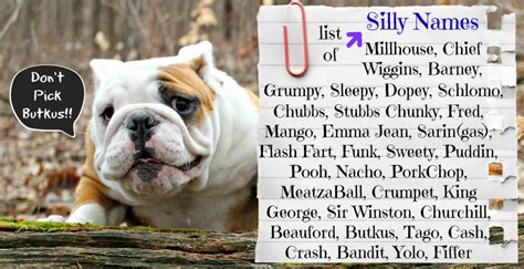 bulldog puppy names bulldog names bulldogs puppy names ask home design