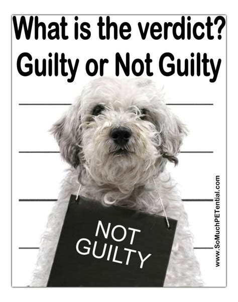puppy not or is your really a guilty so much petential