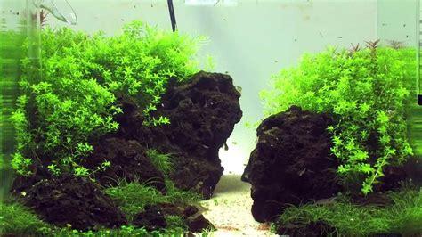 einrichten eines aquascaping aquariums youtube