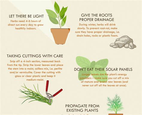 herb grower s cheat sheet infographic how to successfully grow an herb garden