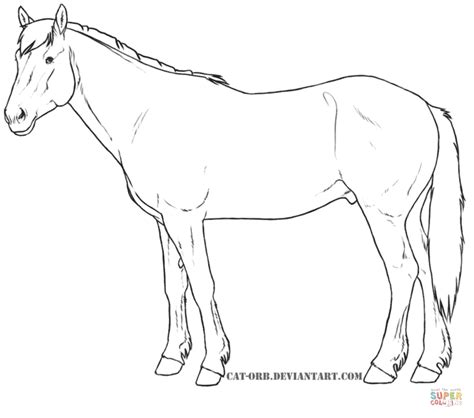 coloring pages of morgan horses morgan horse coloring pages