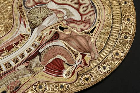 cross section of human body slice of life artistic cross sections of the human body