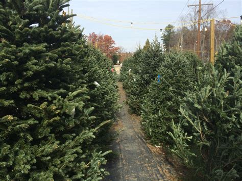 100 christmas tree farm richmond va travel with a