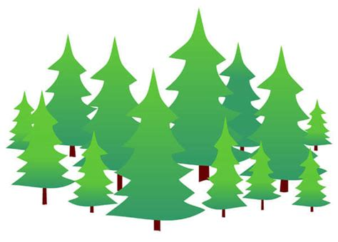 Evergreen Tree Clip by Www Black Forest H 246 Henfl 252 Ge Heidelberg International