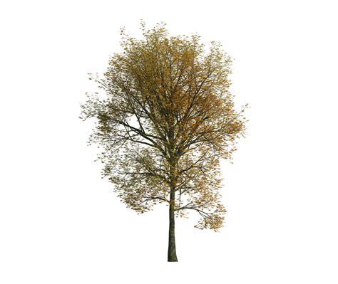 kostenfreie downloads architekturvisualisierungen 3d - Baum Architektur