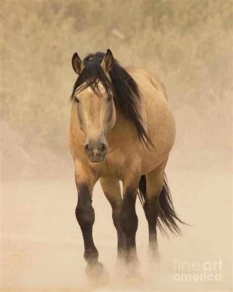Buckskin Horse A Wild Mustang Stallion Horses Pinterest