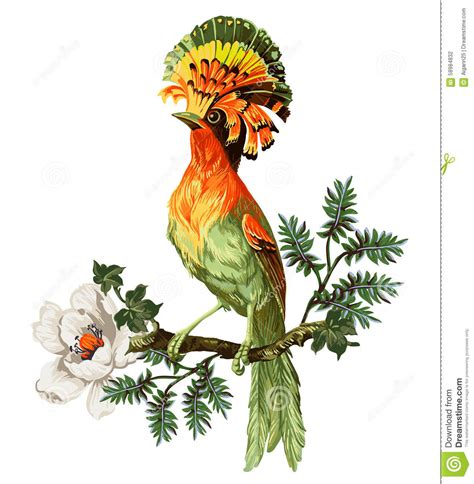 uccelli paradiso fiori bird of paradise and flowers stock vector image