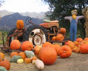 Pumpkin Patch Prepared Not Scared Family Activity Pumpkin Patch Here