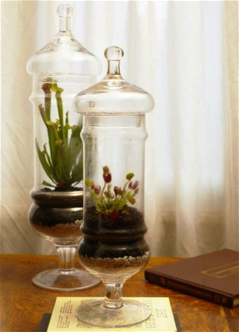 glass home decor 20 ideas for home decorating with glass plant terrariums