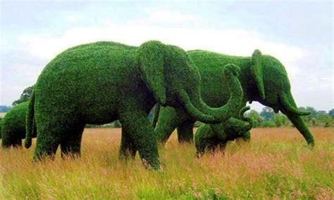 elephant topiary 25 exles of amazing topiary and designs