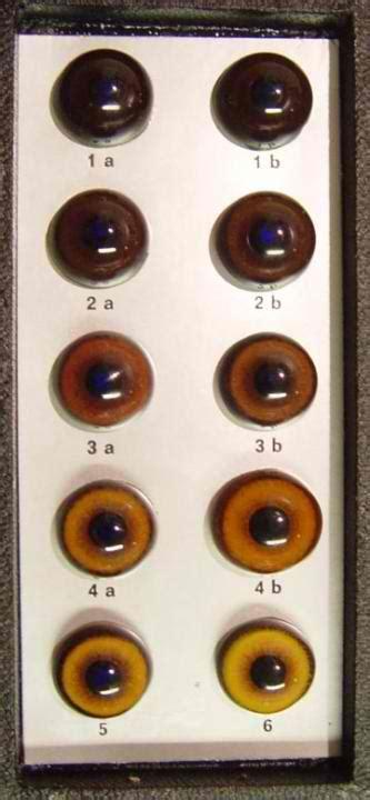rottweiler eye discharge conformation