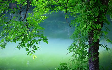 wallpaper green tree summer tree green leaves wallpaper