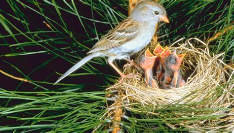 what time of year do wild birds lay eggs sciencing