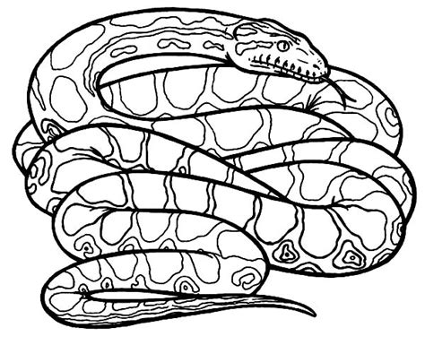 Anaconda Coloring Page anaconda coloring pages to print out coloring pages