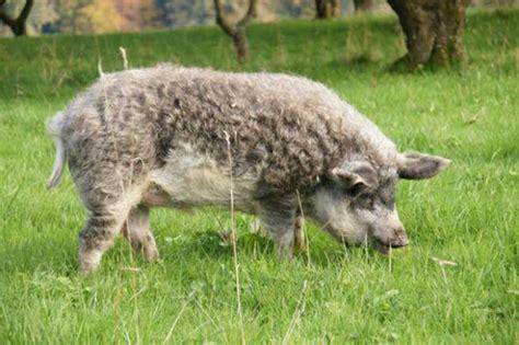 Fotos de animales sorprendentes que parecen ser la mezcla