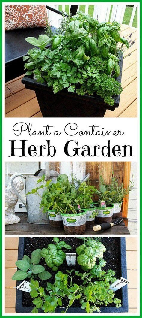 Ideas For Herb Gardens Tips For Planting A Container Herb Garden Gardens Patio And Herbs Garden