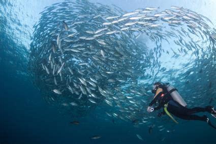 excursion catamaran bali les excursions 224 bali voile vers lembongan indon 233 sie