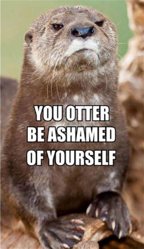 Funny Otter Meme - funny otter dump a day