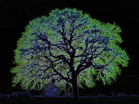 Glimmer Lights Are You Ready For Glow In The Dark Trees Leigh Brown
