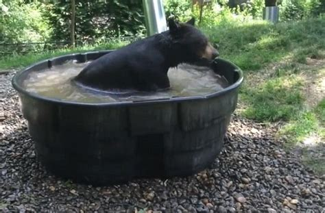 bear in a bathtub oregon zoo s black bear can t get enough of his tub and