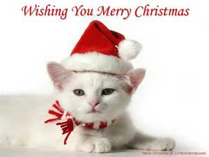 Christmas cats wallpapers christmas kittens wallpapers