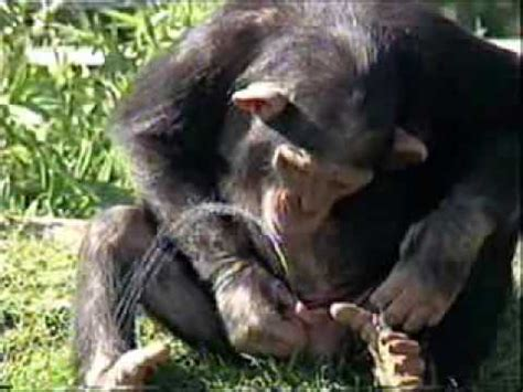 imagenes de animales chistosos animales chistosos youtube