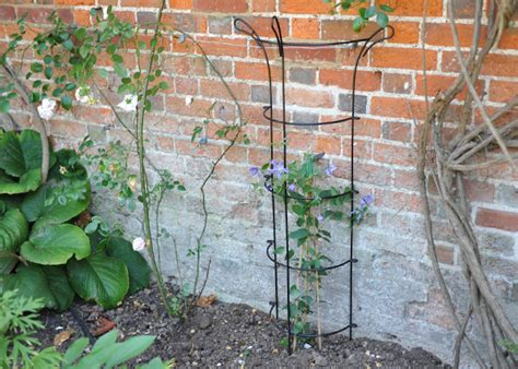 how to support climbing plants buy climber wall support