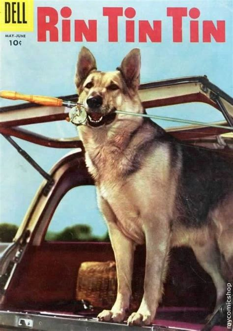 film seri rin tin tin 25 most famous movie dogs from asta to uggie and beyond