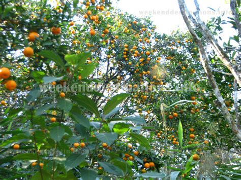 Orange Garden by Rangbang Darjeeling Booking Rangbang Homestay