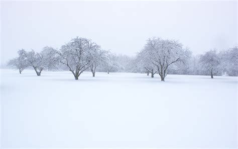 picture of snow snow background image picture 8578 wallpaper walldiskpaper