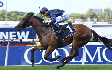 golden slipper winners and placegetters tulip blooms in magic at rosehill