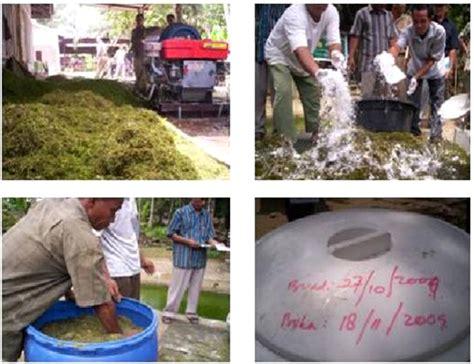Bibit Sapi Fh sapi perah fh fermentasi daun kelapa sawit untuk pakan sapi