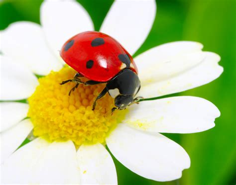attracting beneficial insects ridgeview