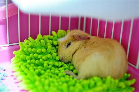 guinea pig bedding ideas omg i could just buy a duster or mop and remove the soft