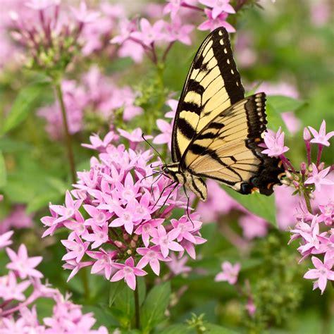 Parfum Flower perfume like erfly flower style by modernstork
