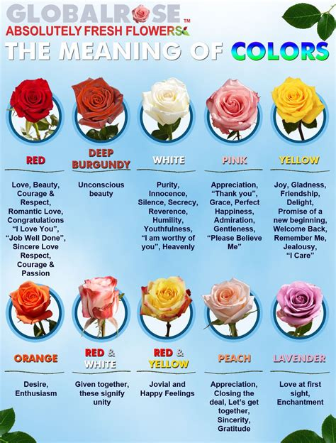 meaning of roses color global frequently asked questions misu likes